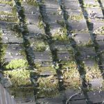 Illinois wood shingles installation - Moss growing on wood shakes surface in shaded area